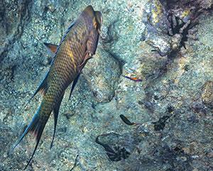 galapagos fish