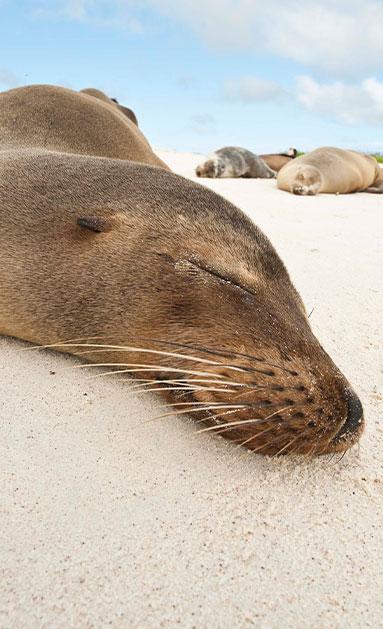 sea lion close up photo