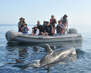 dolphing approaching a boat in galapagos
