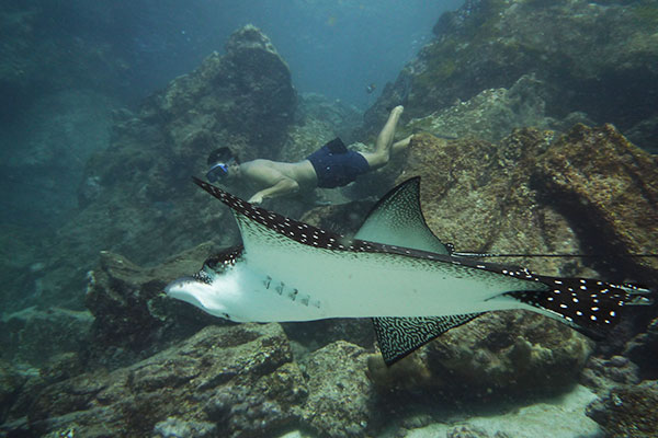 traveler diving with manta rays
