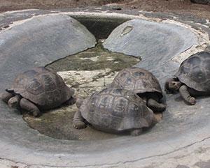 Galapagos tortoises environment