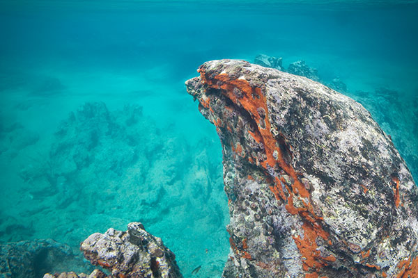 underwater view galapagos